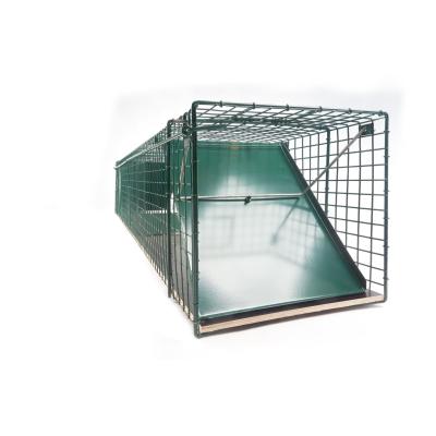 Waschbärfalle 150x31x31cm mit Holzboden [pulverbeschichtet]